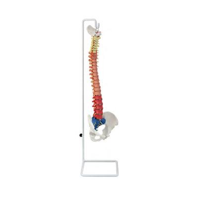Coluna Didática Flexível