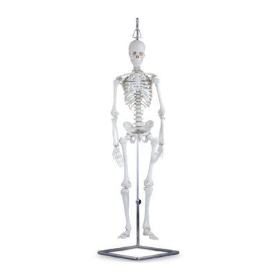 Mini Esqueleto Montado em Suporte de Suspensão