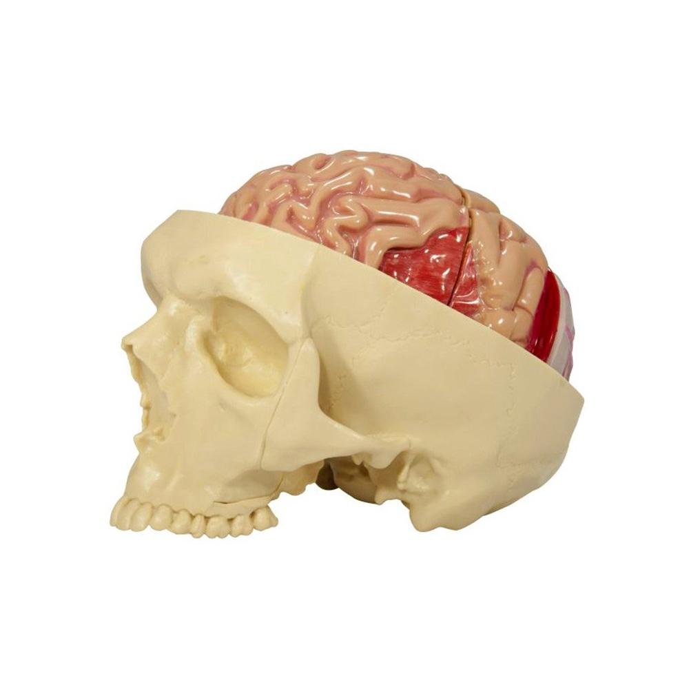 Modelo visão lateral