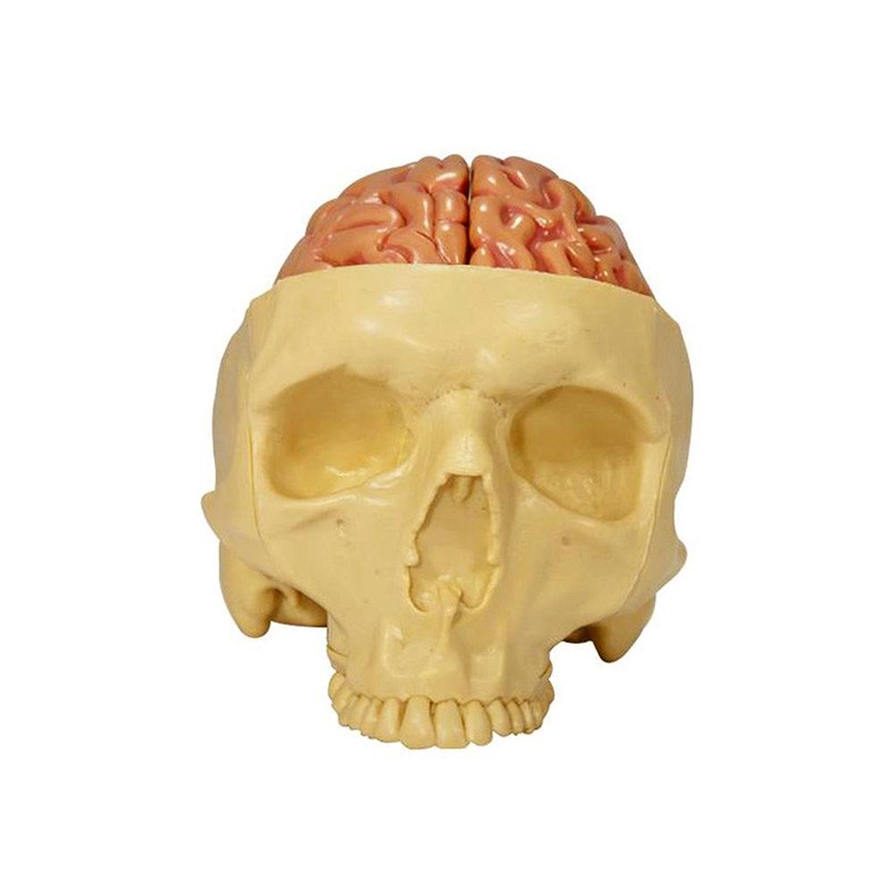 Modelo visão frontal