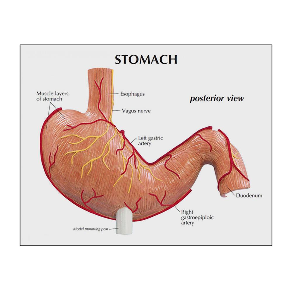 Estômago com Úlceras cartão 02