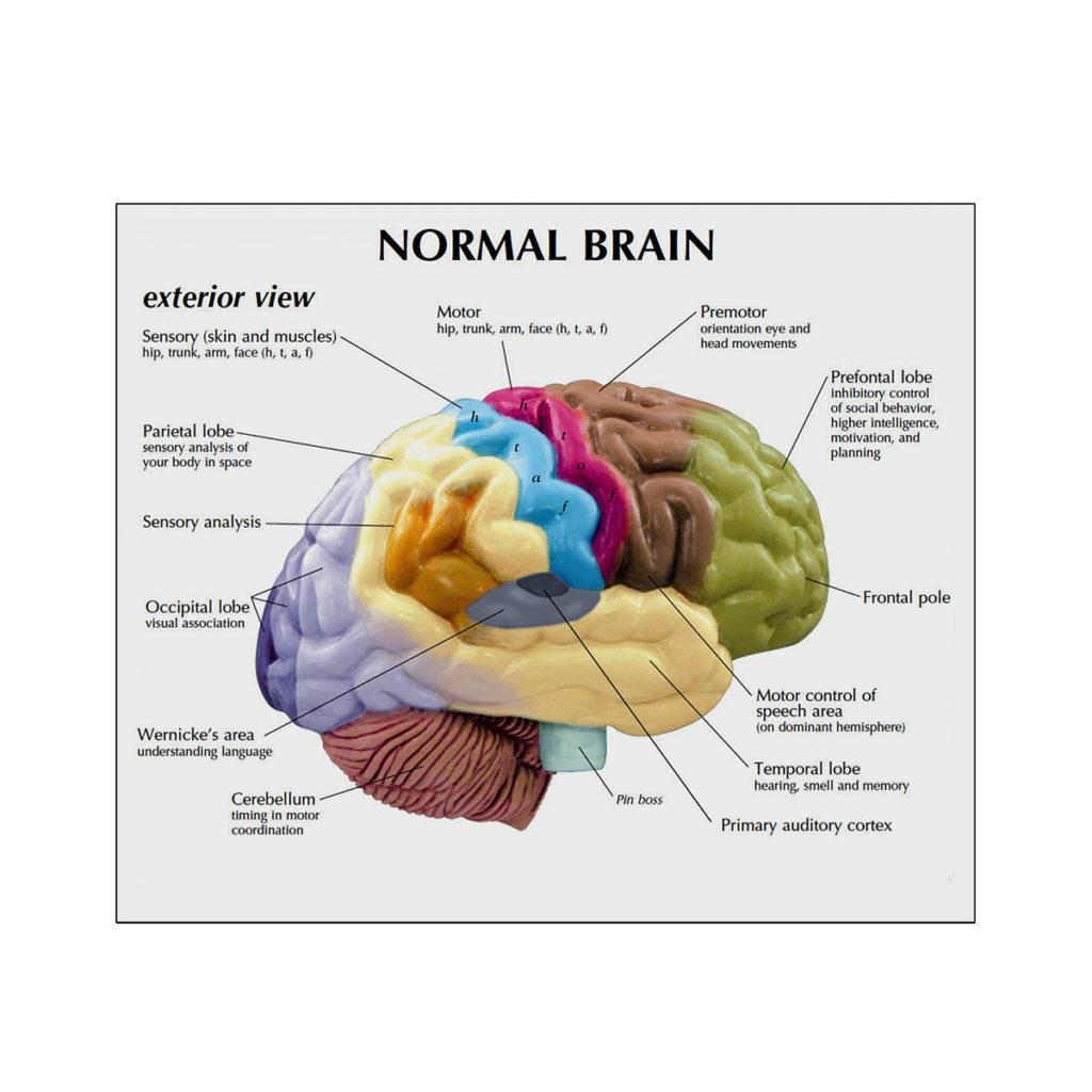 Meio Cérebro 01 cartão