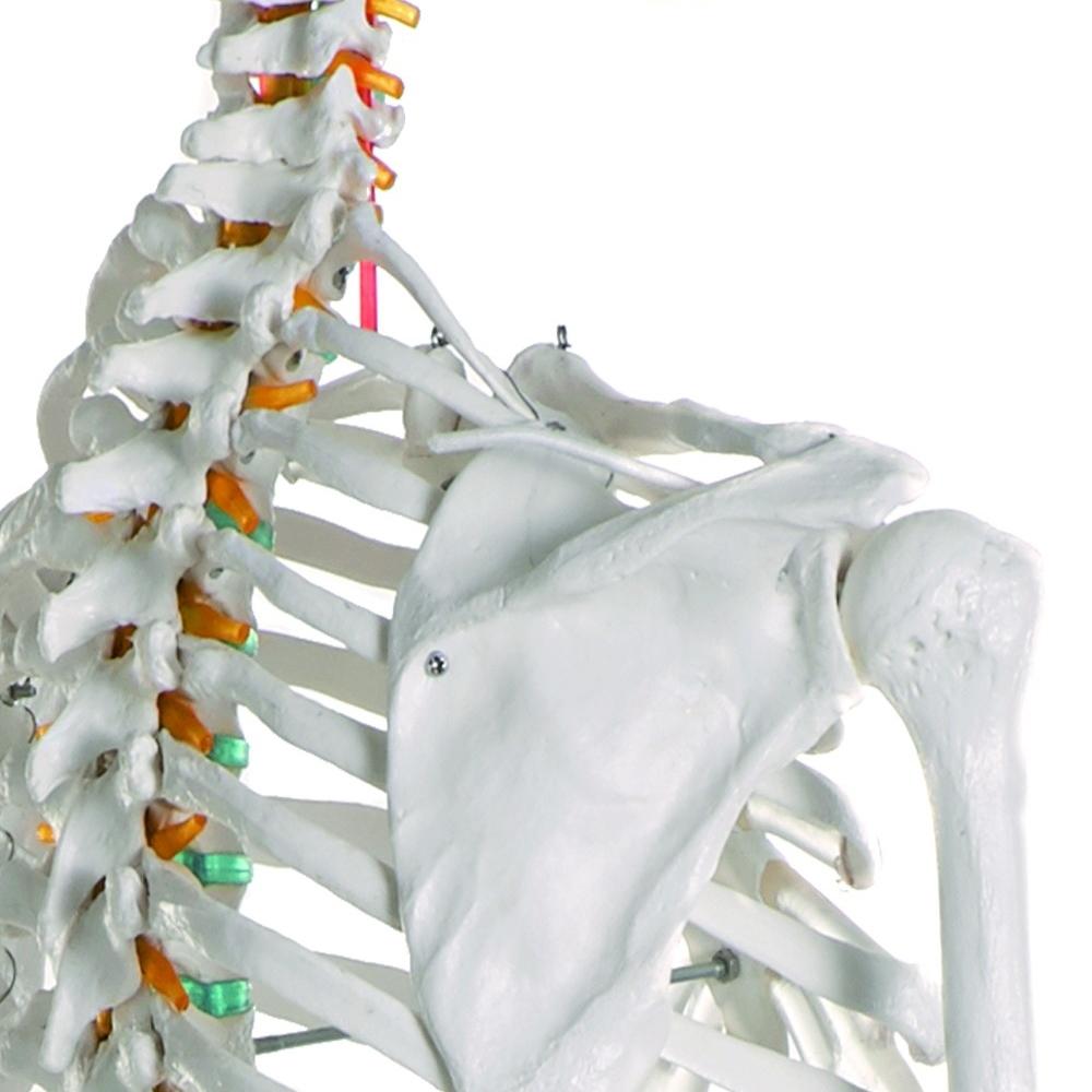 pescoço e ombro