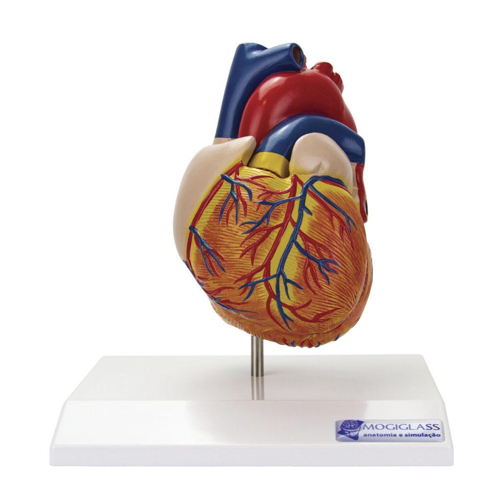 Coração Clássico com Sistema Condutor 2 Partes frente