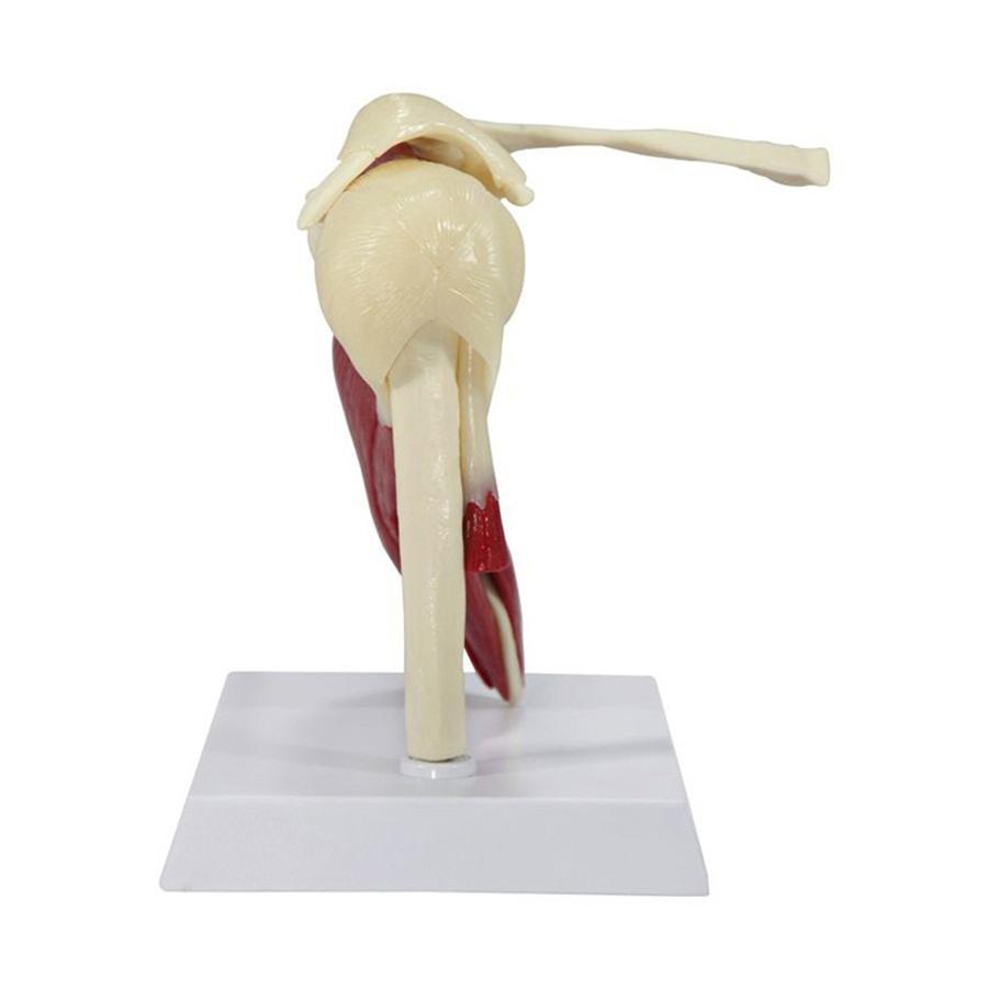 modelo - visão lateral esquerda