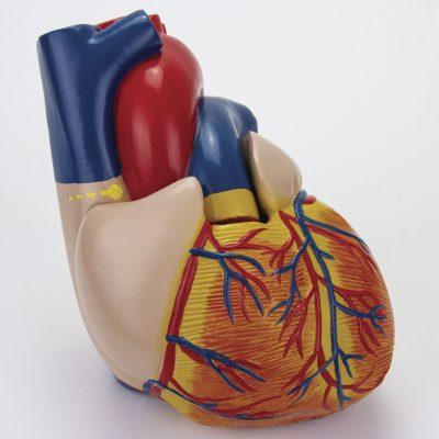 Coração Clássico com Sistema Condutor 2 Partes