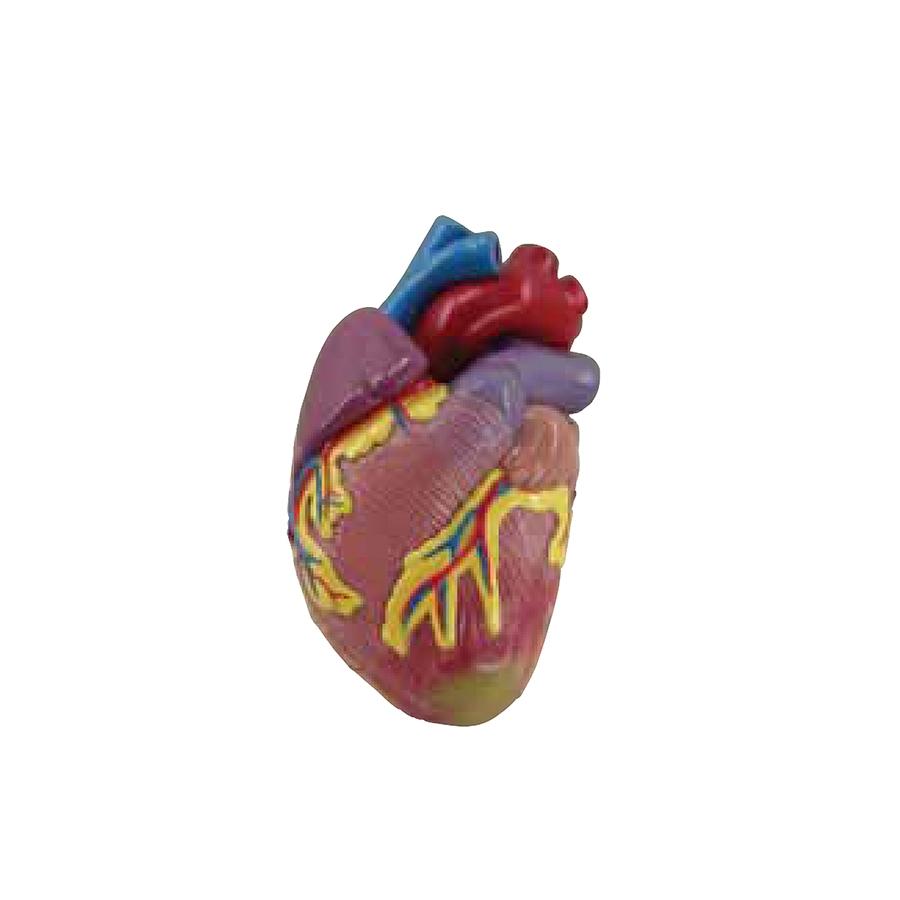coração - miniatura