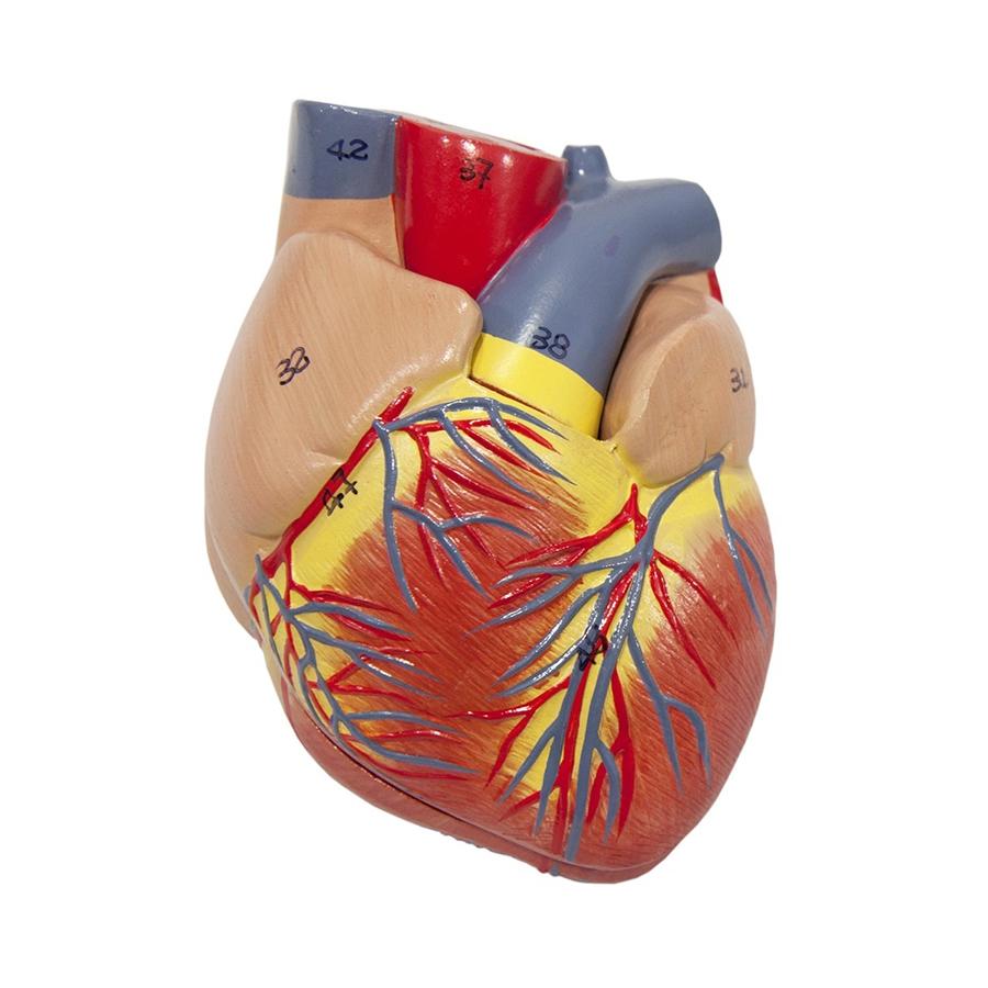 coração - detalhe