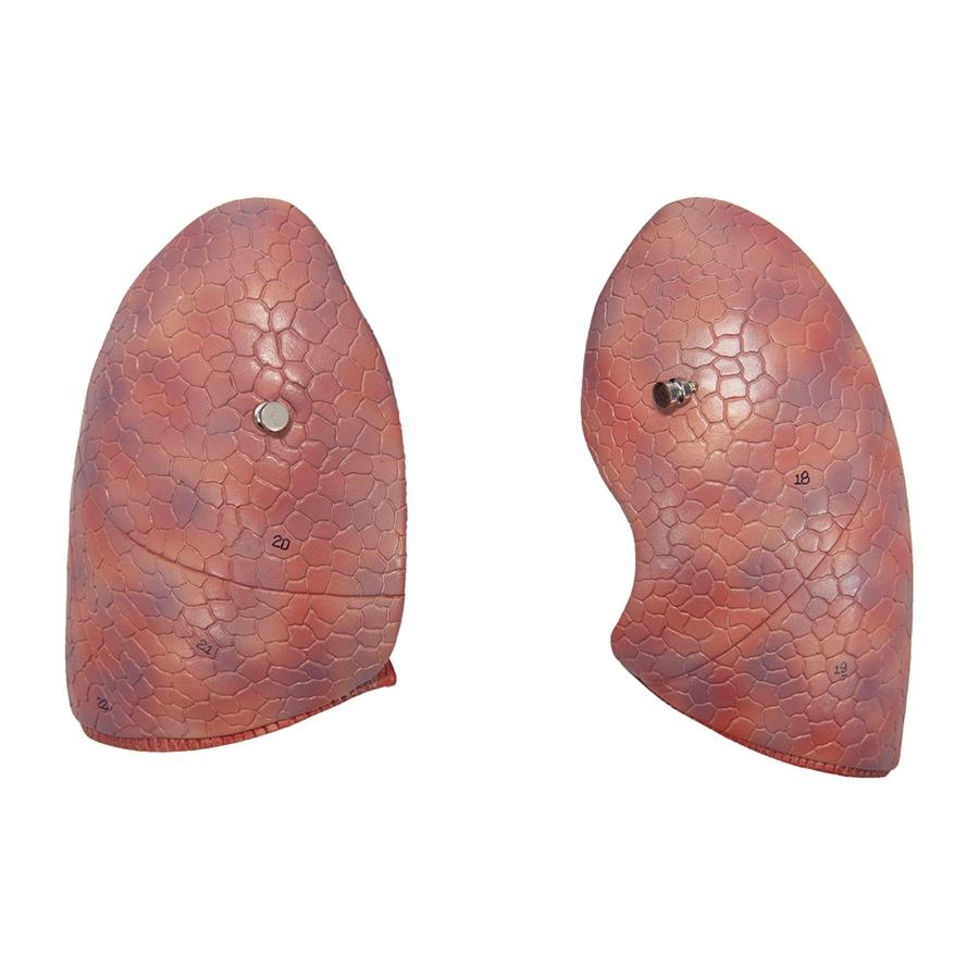 pulmões - detalhe