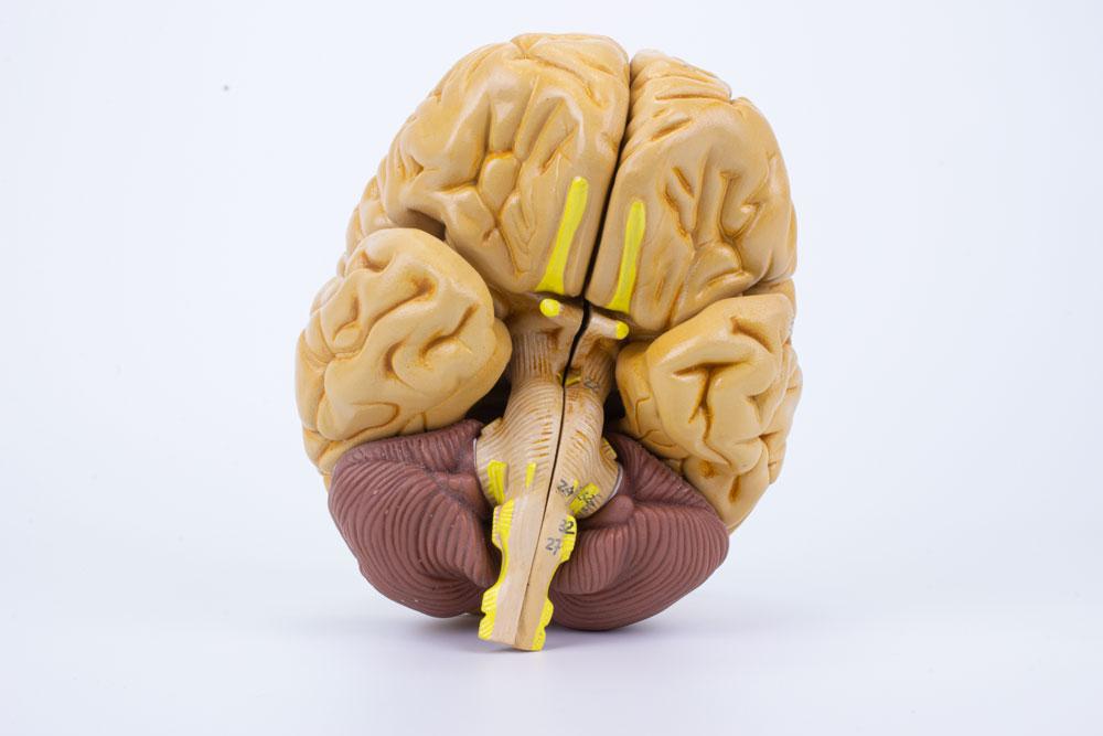 Cérebro Clássico 8 Partes