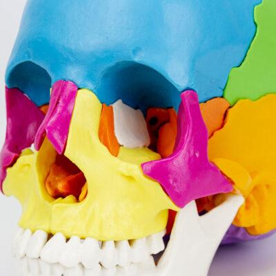 Crânio de Encaixe em 22 Partes